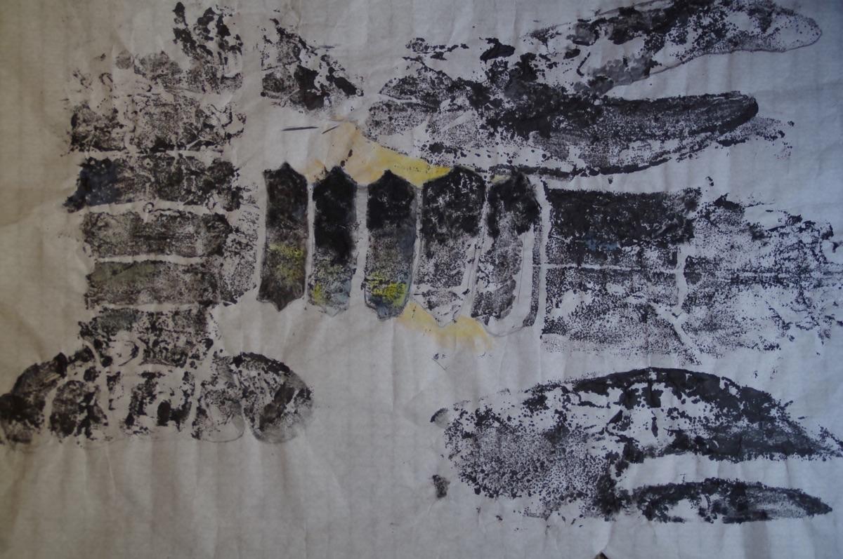 Estudio de bogavante - Fotografía: Esteban Fuentes