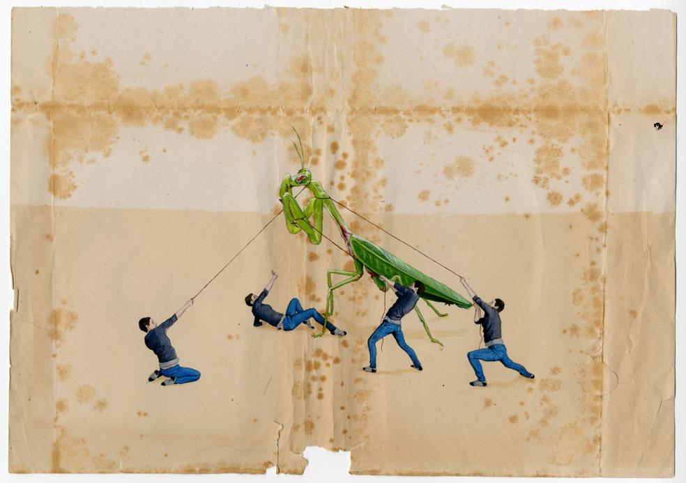Tamara Feijoo «Doppelgänger (mantis)» Témpera sobre papel 39,5 x 48 cm 2010 Sobre un papel con aspecto envejecido está dibujada una mantis que sujetan con cuerdas, desde diferentes lugares, pequeños hombres