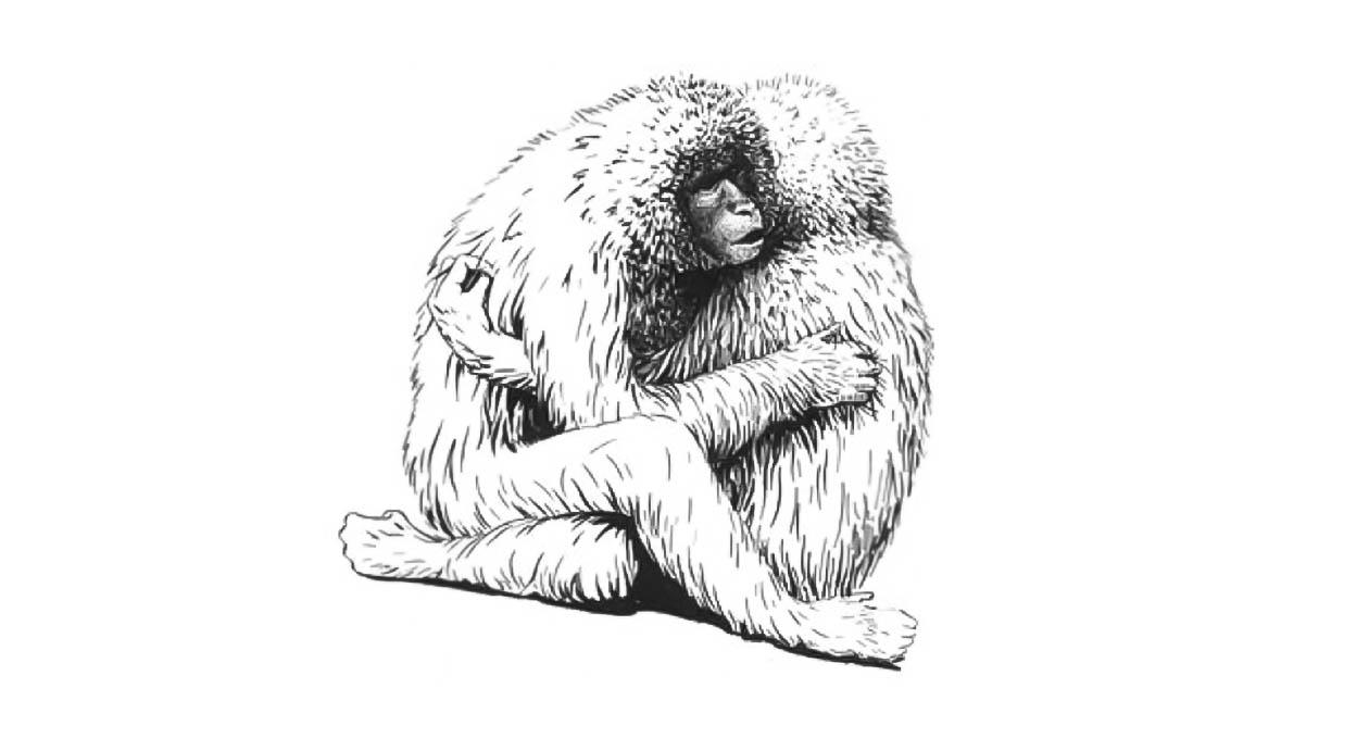 John Megahan «Sexo homosexual entre dos macacos hembra»