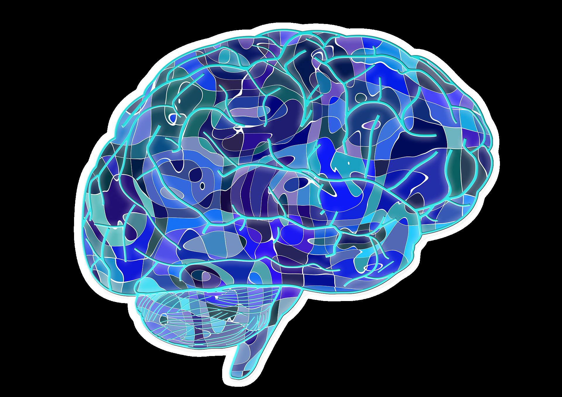Ilustración decorativa del cerebro