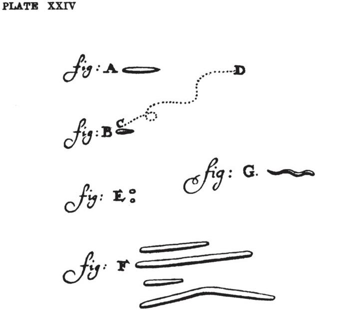 Imagen de la ilustración que incluye la carta y que muestra detalladamente varios tipos de bacterias diferentes, como bacilos, cocos y espirilos.