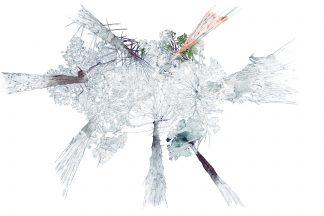 Yolanda González «Los más altos. Ilustración principal» Fuente: 'Botánica insólita'