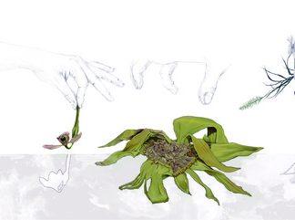 botanica-insolita_11-plantas-amenazadas-ilustracion-principal_image671_405